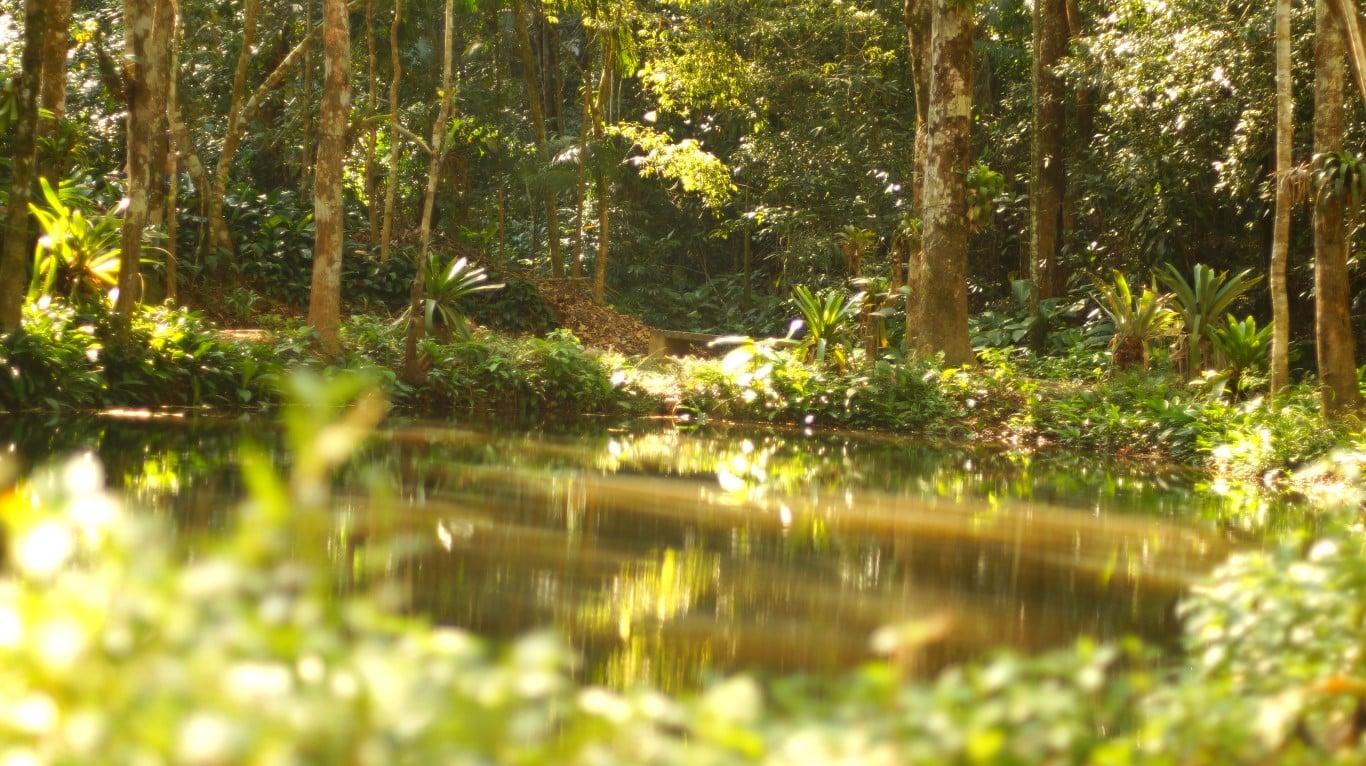 Lago das Fadas, Ponte dos Suspiros, Floresta da Tijuca