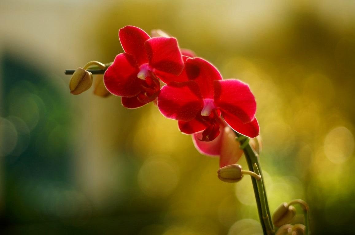 orquídea do orquidário do Jardim Botânico do Rio de Janeiro