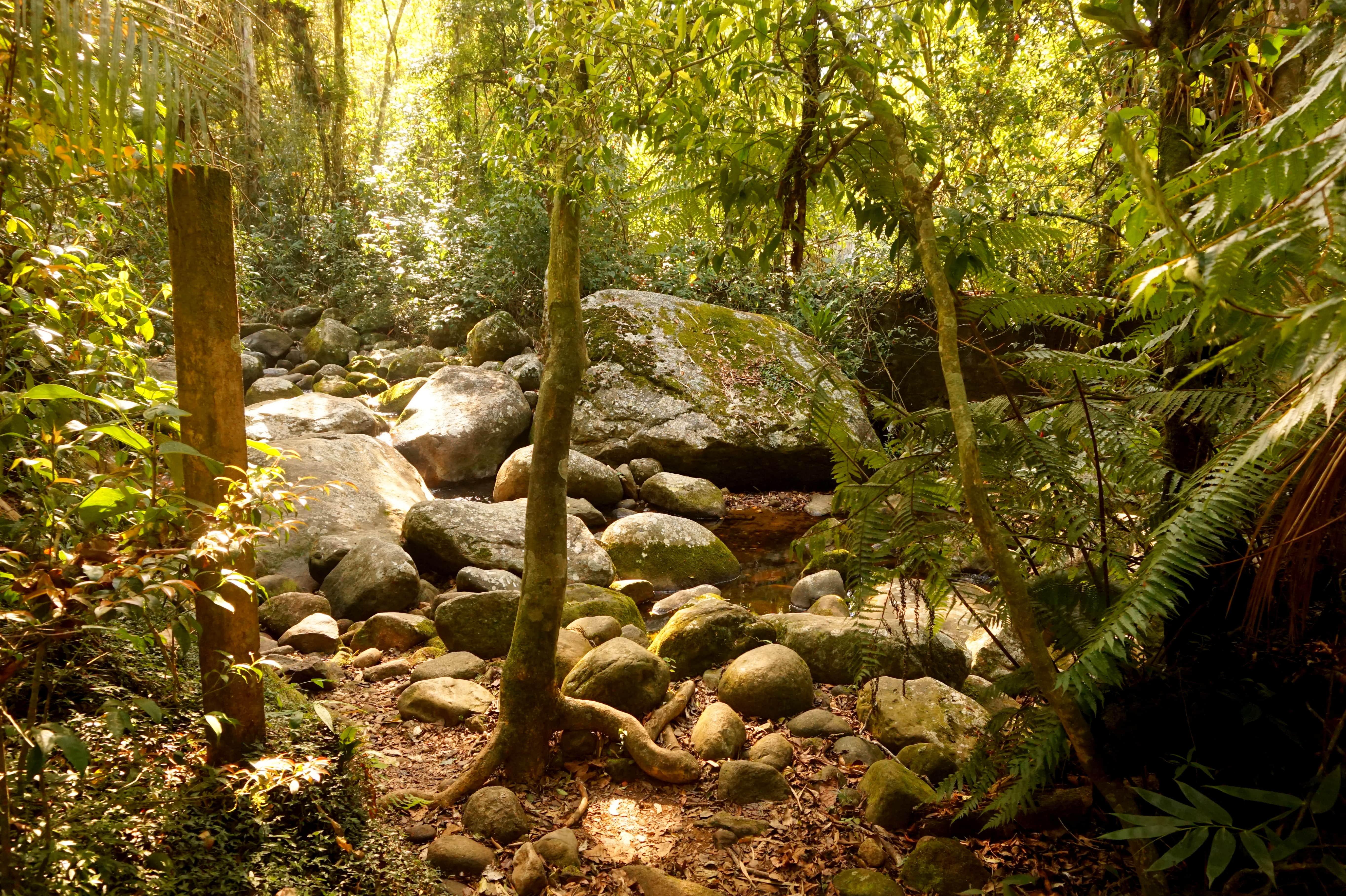 Parque Nacional Serra dos Órgãos Teresópolis